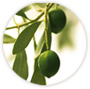 ingredient_olive